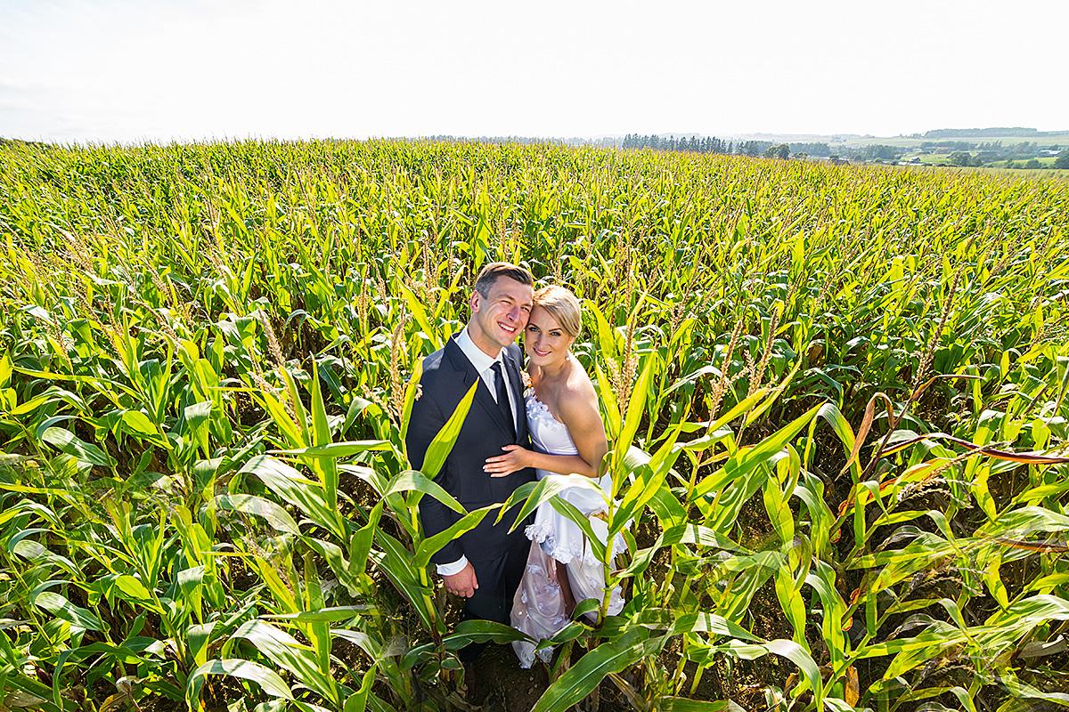 kukurūzai, šypsenos, jaunieji, laukas, gamta, vestuvinis kadras